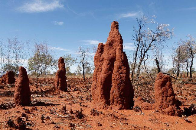 termite-mounds